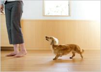 床のペット対応リフォーム